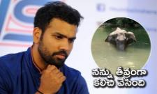 Rohit Sharma Furious Over Killing Of Pregnant Kerala Elephant - Sakshi