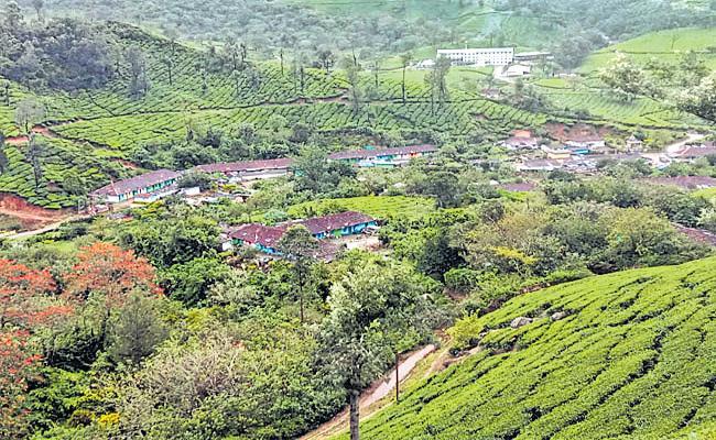 Munnar Tea Garden Special Story In Kerala - Sakshi