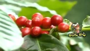 Batuku chitram on Araku coffee - Sakshi