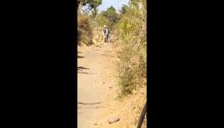 Lioness And Her Cubs Give A Way To Biker At Gir Sanctuary In Gujarat - Sakshi
