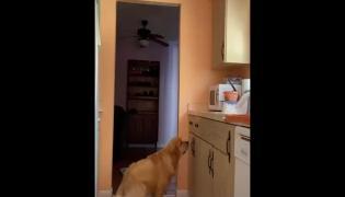 Dog Expression Viral Video