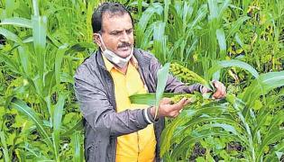 Veer Shetty Biradar Millets Farming Story In Sagubadi - Sakshi