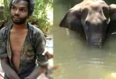 Pregnant Elephant Murder: This Man Is Not The Killer - Sakshi