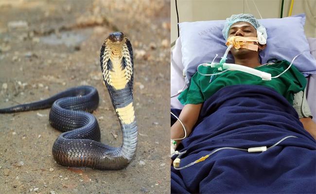 Alcohol Drunked man Catches Snake And Hospitalized - Sakshi