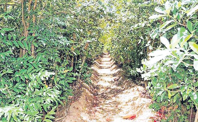 Japan Country Forest Model In Hyderabad - Sakshi