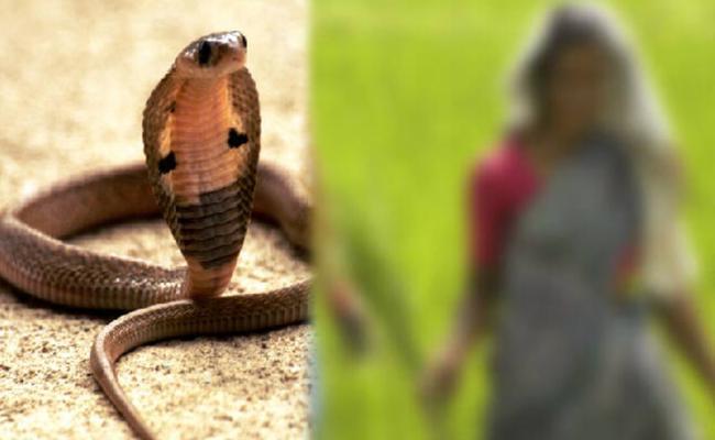 Woman Dies With Snake Bite In Avanigadda Krishna District - Sakshi