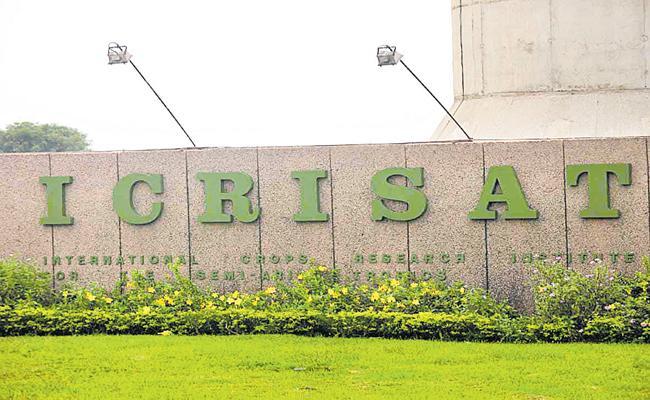 Record of Icrisat fodder seed - Sakshi