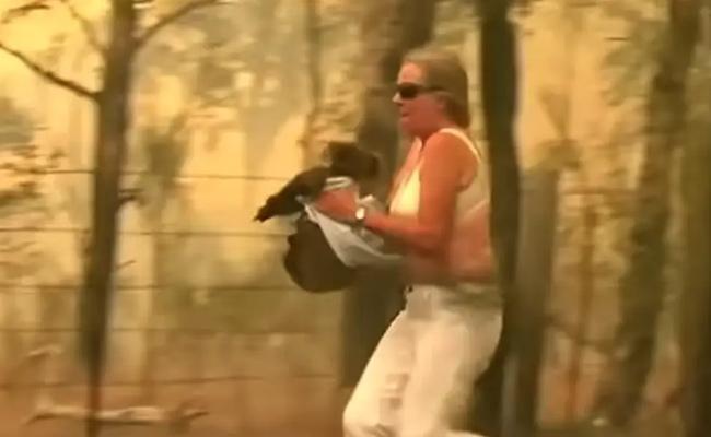Woman Rescues Koala From Australian Bushfire Using Her Shirt Became Viral - Sakshi
