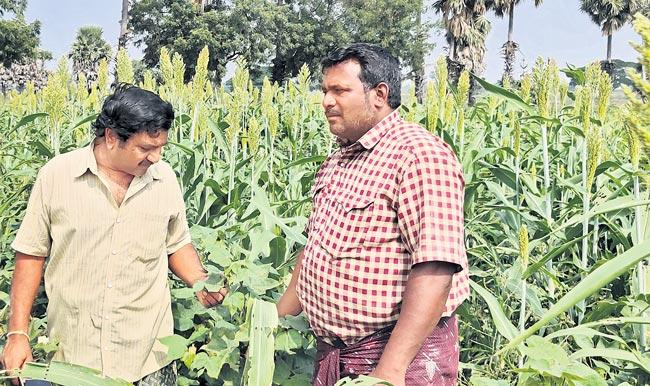 Arimilli Krishna, Bapiraju Brothers Joint Farming - Sakshi