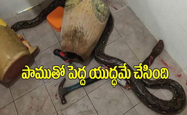 Thailand Woman Gets Bitten By Snake Hiding Inside Toilet - Sakshi