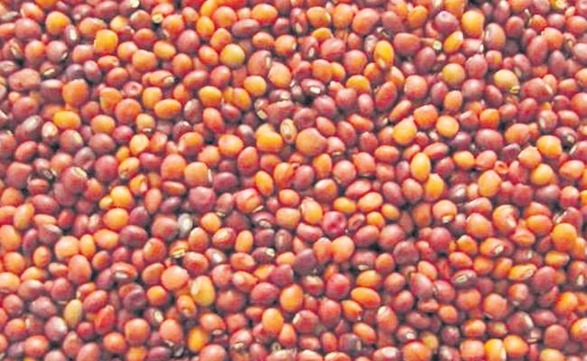 Telangana Government Decided To Purchase Toor Dal From Farmers - Sakshi