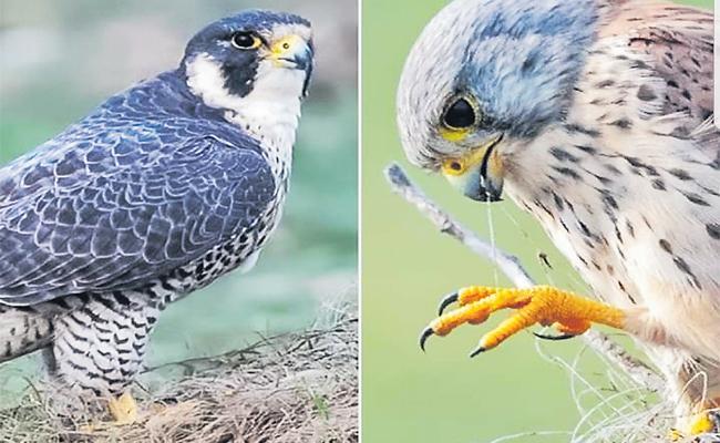 Birds Taking Shelter In Hyderabad - Sakshi