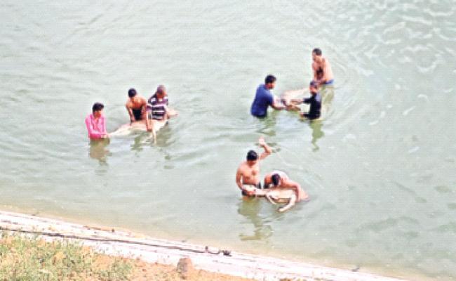Animals Died In Warangal - Sakshi