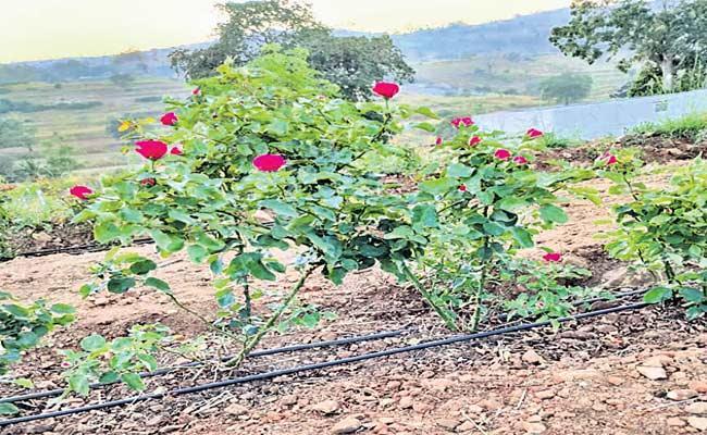 Rose Field Day 2020 Celebrations In Tamilnadu - Sakshi