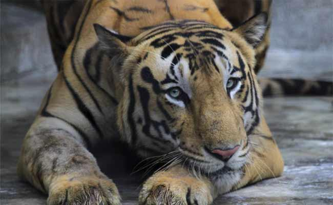 Zoo Animals Are Free Wandering With Lockdown - Sakshi