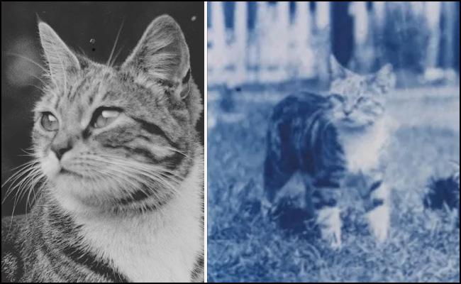 YouTuber Mathieu Stern Develops 120 Year Old Photos - Sakshi