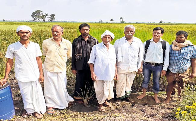 Athota Farmer Agriculture Indigenous rice Crops - Sakshi