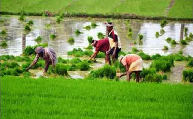 Government hikes Minimum Support Price For Key Kharif Crops - Sakshi