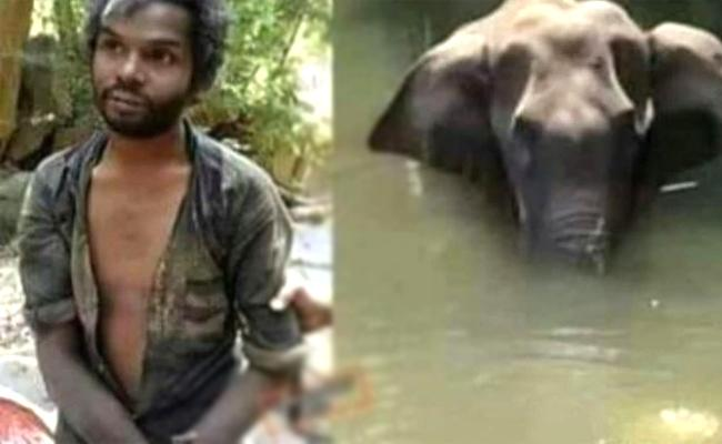 Pregnant Elephant Murder: This Man Is Not The Killer - Sakshi