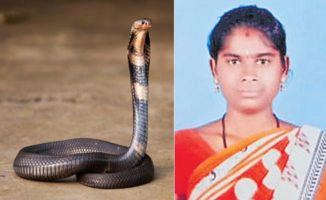 Married Woman Deceased With Snake Bite in Rangareddy - Sakshi