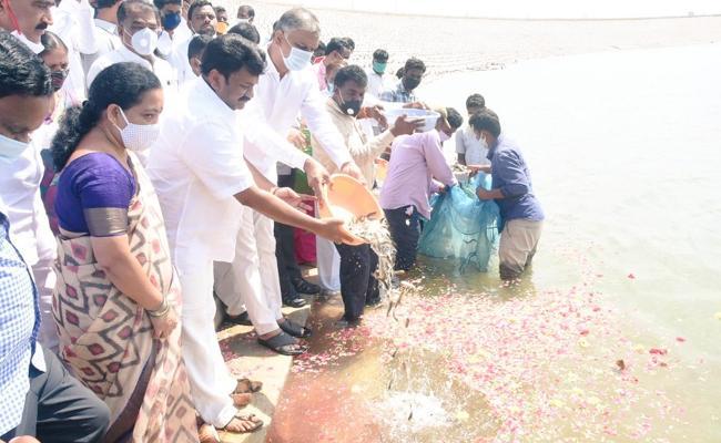Fishes released in to Kondapochamma Reservoir - Sakshi