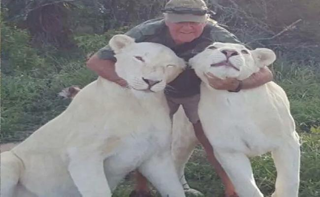 South African Conservationist Assassinated By His Own White Lions - Sakshi