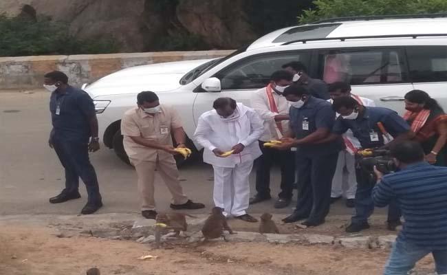Telangana CM KCR Feeding Fruits To Monkeys - Sakshi